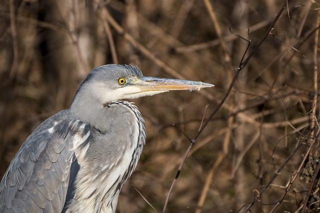 Heron, Grey Heron, Nature, Species, Water Bird, Feather