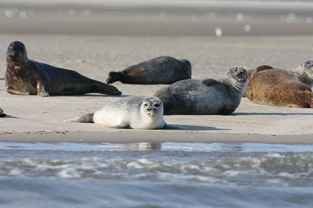 Seals, Coast, Sea, Harbor Seals, Grey Seals