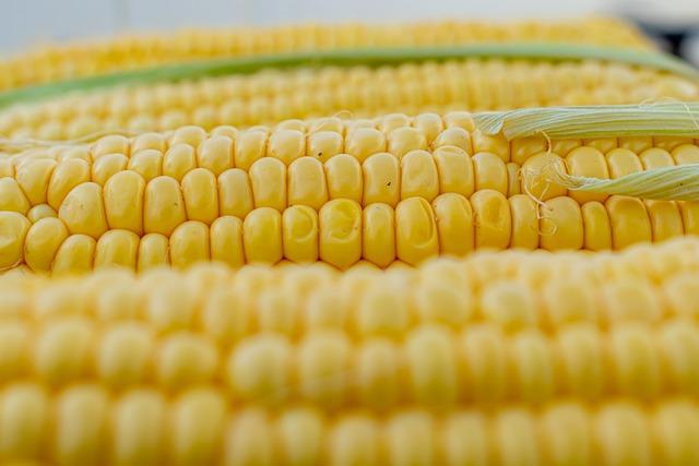 Corn, Corn On The Cob, Corn Kernels, Yellow, Grill
