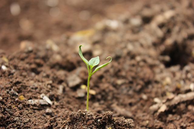 Soil, Ball-shaped, Little, Ground, Sprout