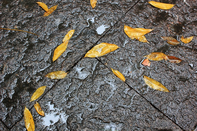 Defoliation, Ground, Rain, Yellow Leaves
