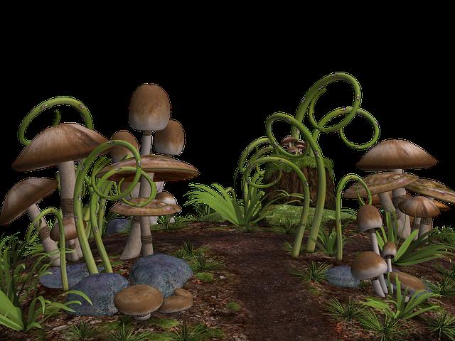 Mushrooms, Mushroom Landscape, Stones, Grass, Ground