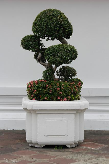 Bonsai, Tree, Bäumchen, Green, Leaves, Grow