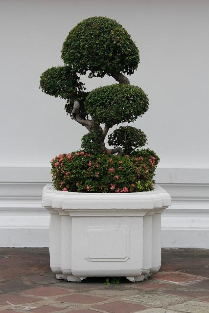 Bonsai, Tree, Bäumchen, Green, Leaves, Grow