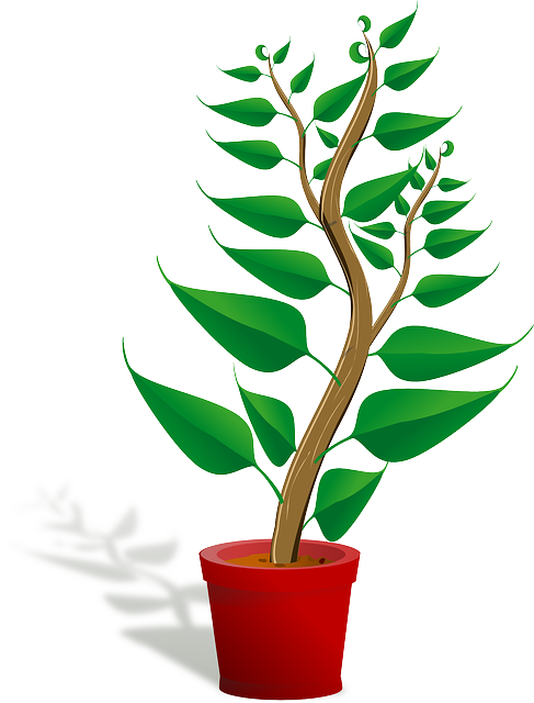 Seedling, Potted Plant, Sapling, Plant, Growing, Growth