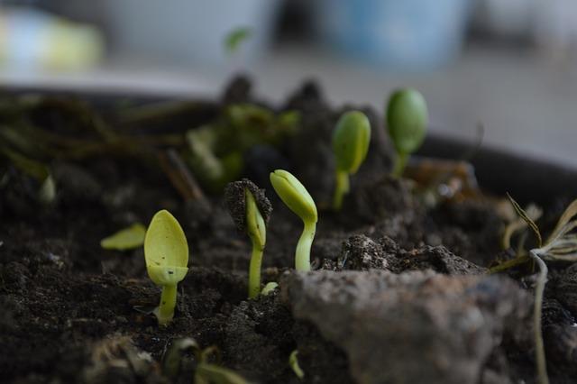 Grown Up, Born, Earth, Nature, Soil, Moisture