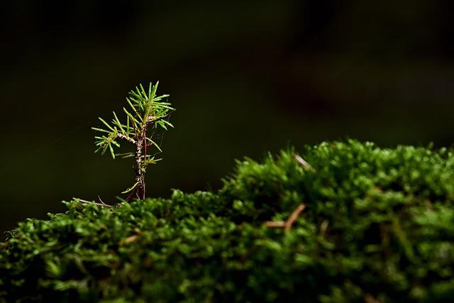 Tree, Moss, Seedling, Plant, Grows, Grow, Green
