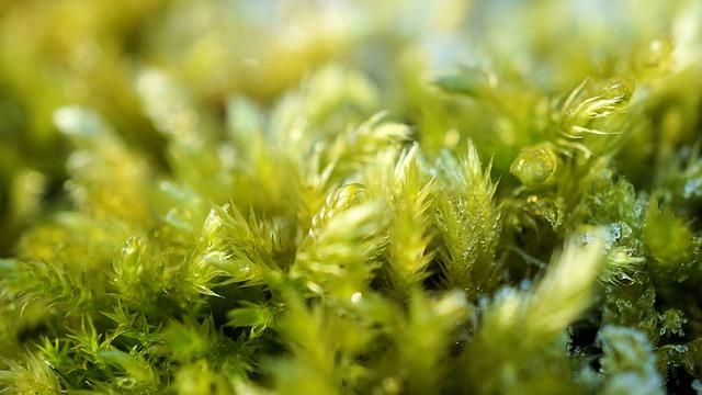Moss, Green, Nature, Plant, Leaf, Growth, Summer, Fresh