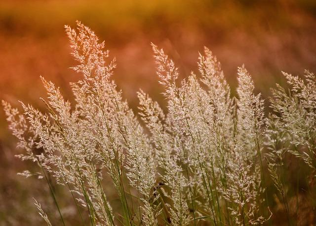 Nature, Growth, Season, Plant, Field, Grass, Dry, Ear