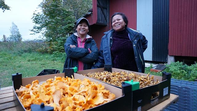 Karlstad, Mushrooming, Grzyb