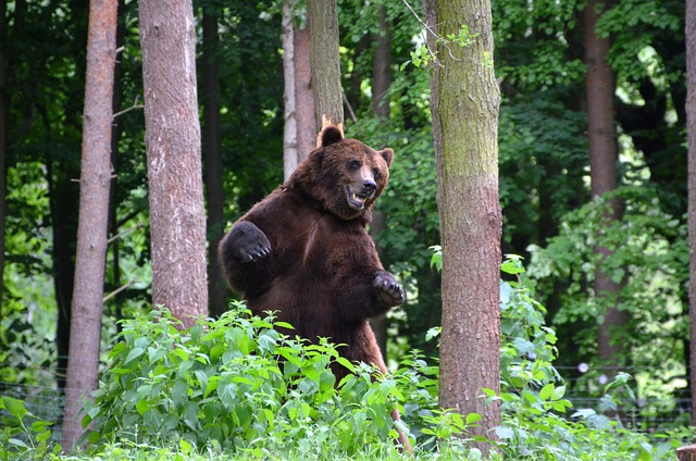 Bear, Forest, Eco-park, Güstrow