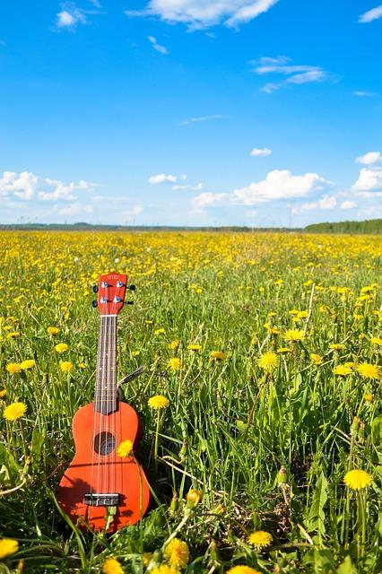 Flower, Guitar, Sky, Summer, Ukulele