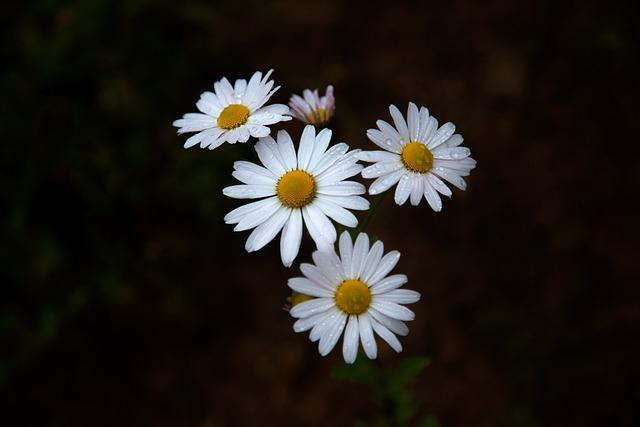 Gujeolcho, Autumn, Wildflower, Their Mums