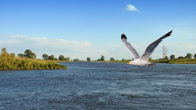 Landscape, River, Bird, Gull, Fly, Flies, Elbe