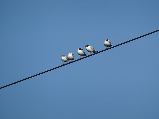 Birds, Power Line, Gull, Sky, Blue, Weather, Clear