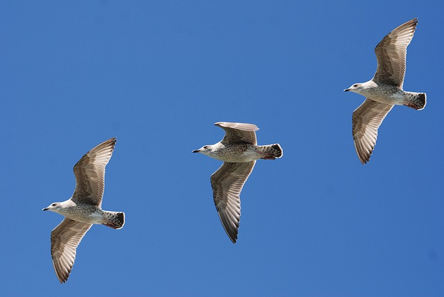 Gulls, Seagull, Wings, Feather, Sky, Flight, Nature