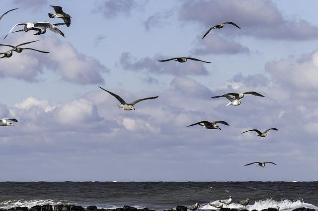 Gulls, Nature, Bird, Fly, Sea, Sky, Freedom, Waterfowl