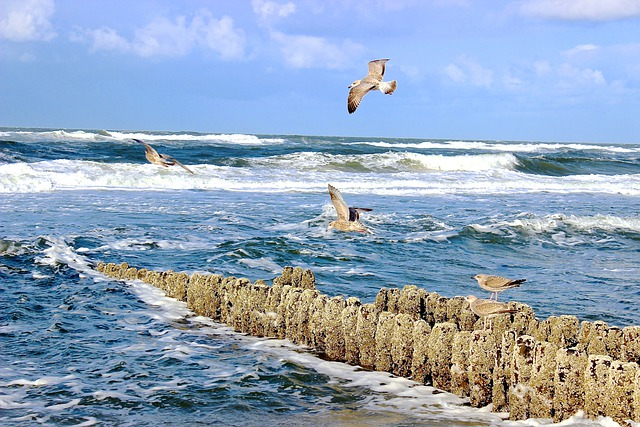 Sea, Surf, Gulls, Wave, Groyne, Sylt