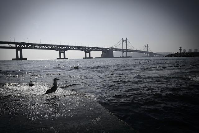 Gwangan Bridge, Pigeon, Sea