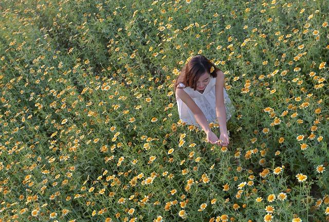 The Daisies, Girl-on Application, Ha Noi Vietnam