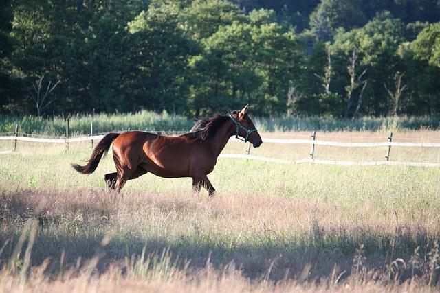 Horse, Hage, Summer, Bed, Swedish Summer