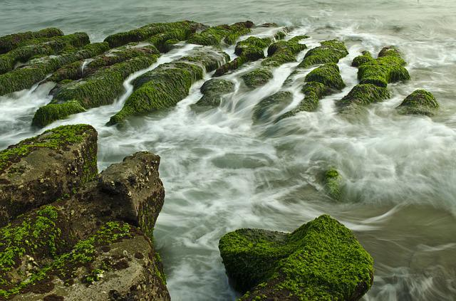 Algal Reef, Landscape, Hai Bian