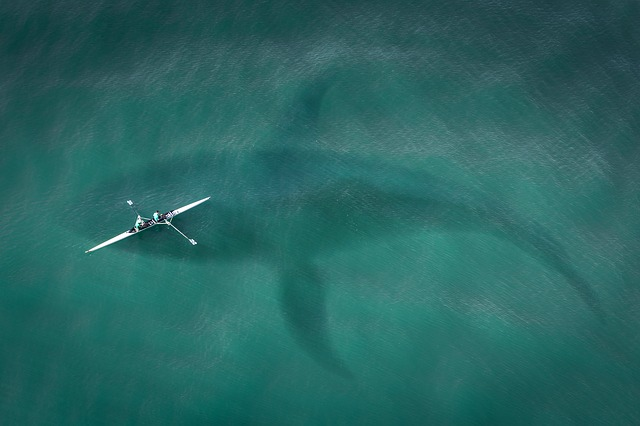 Boat, From Above, Top View, Hai, Great White Shark