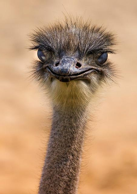 Fauna, Ostrich, Nature, Hair, Animal, No Person