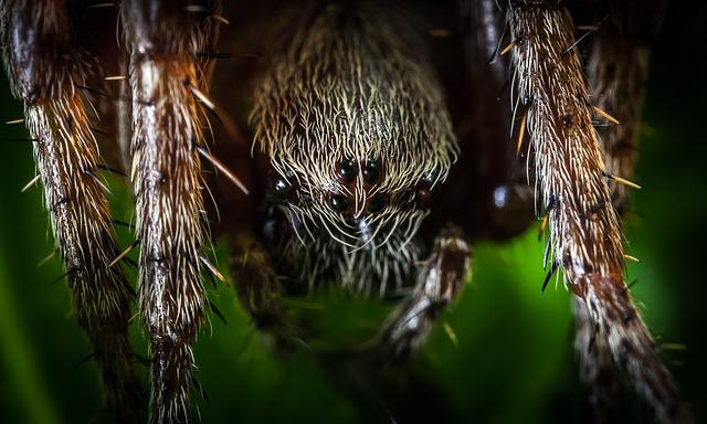 Spider, Nature, Insect, Outdoors, Hairy, Arachnids