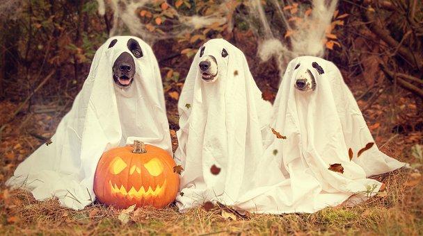 Halloween, Pumpkin, Gourd, Creepy, Pumpkins Autumn