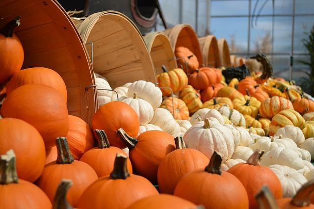 Gourds, Fall, Autumn, Orange, Decoration, Halloween