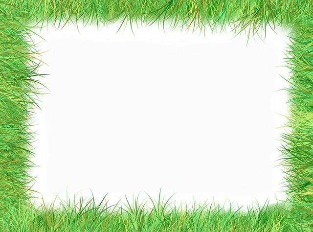 Frame, Picture Frame, Outline, Grass, Meadow, Halme