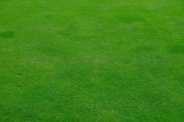 Rush, Meadow, Grass, Green, Spring, Halme, Lawn Mowing
