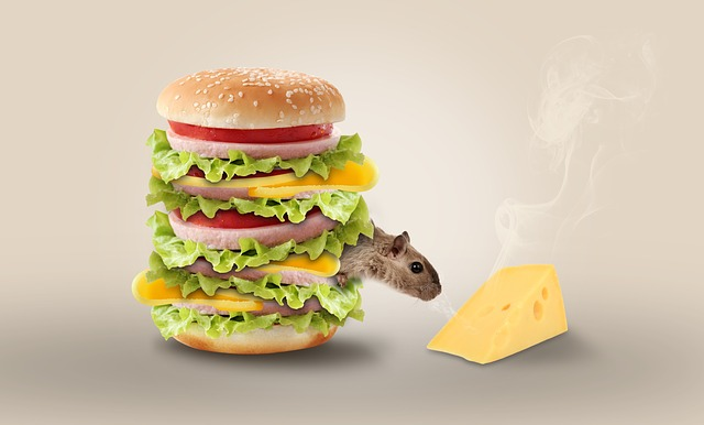 Cheese, Mouse, Hamburger, Funny, Snacks, Nager, Rodent