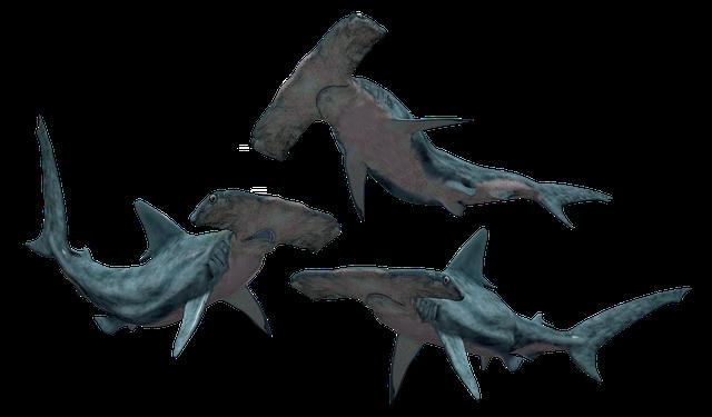 Shark, Sharks, Hammerhead, Fish, Danger, Dangerous