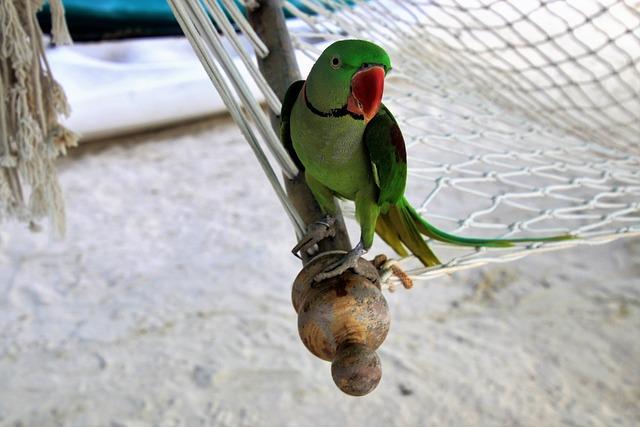 Hammock, Sand, Parrot, Holiday, Colors, Maldives, Beach