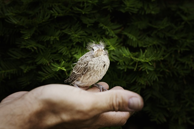 Hand, Baby Cardinal, Cardinal, Bird, Fly, Wings