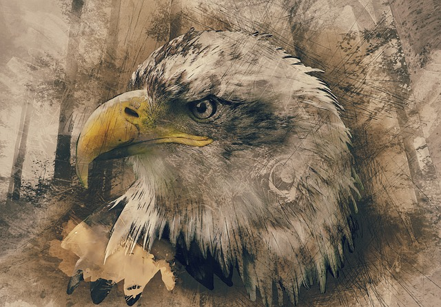 Bald Eagle, Hand Drawn, Computer Art, Animal, Wildlife