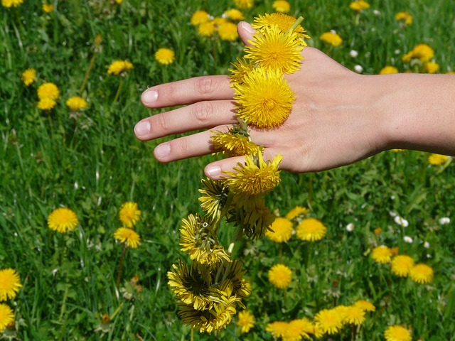 Dandelion, Dandelion Crown, Wreath, Hand, Flower