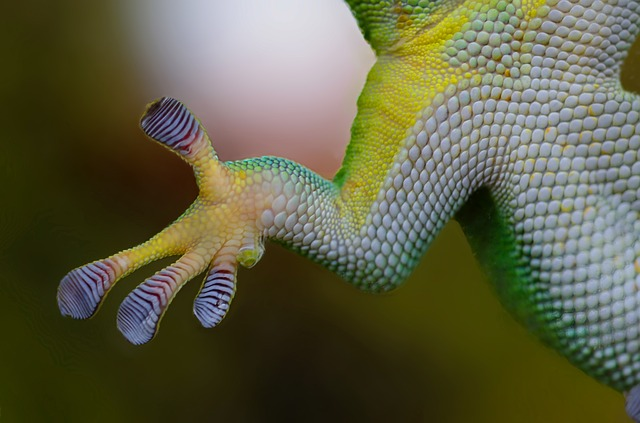 Gecko, Hand, Sticky, Nature, Reptile, Lizard, Animal