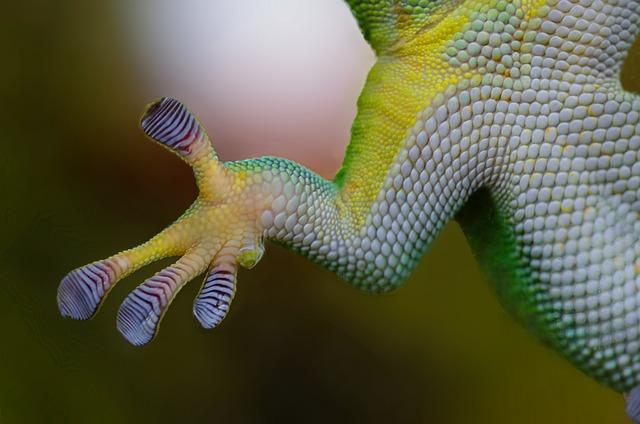 Gecko, Hand, Sticky, Nature, Reptile, Lizard, Animal