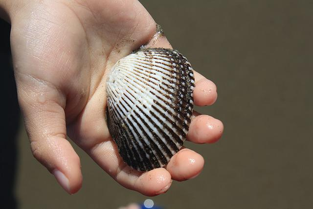 Shell, Seashell, Shellfish, Hand