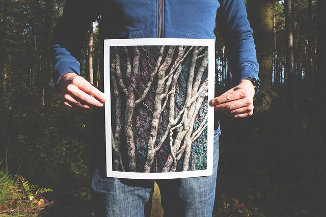 Forest, Hands, Held, Man, Person, Picture, Roots, Trees