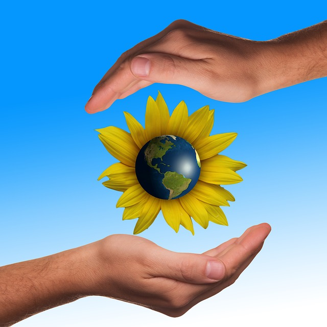 Hands, Protect, Protection, Sun Flower, Globe, Earth