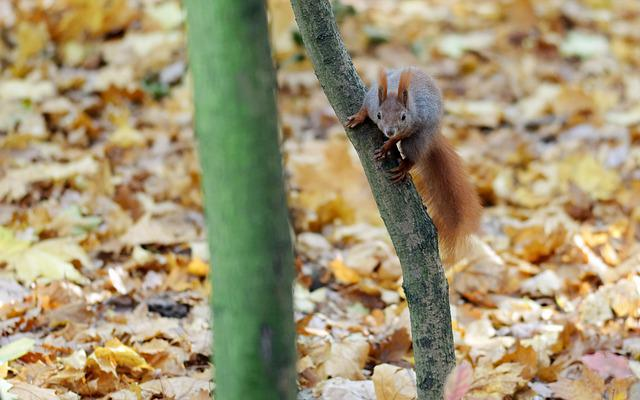 Squirrel, Pet, Rodent, Fur, Line, Thick, Hang, Trunk