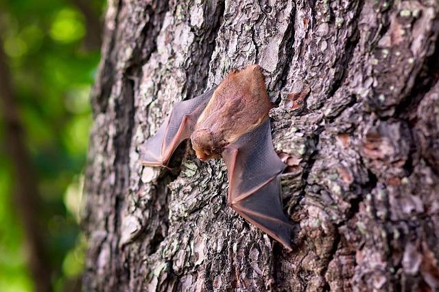 Bat, Mammal, Wildlife, Spooky, Wing, Halloween, Hanging
