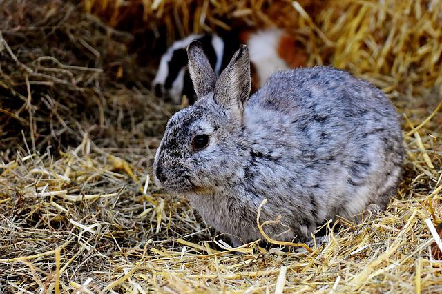 Rabbit, Nager, Cute, Hare, Animal, Pet, Long Eared, Fur