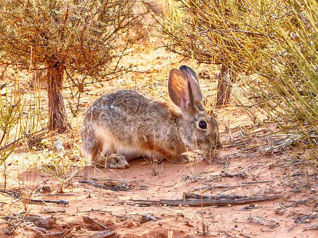 Hare, Arches National Park, Hiking, Utah