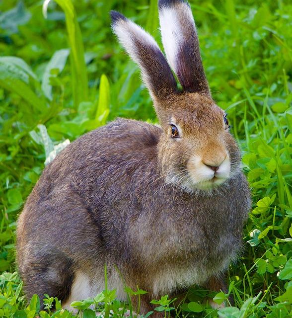 Nature, Animals, Hare, Portrait