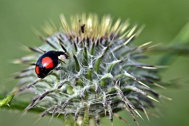 Ladybug, Asian Ladybug, Harmonia Axyridis, Red Dots